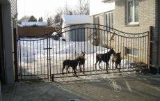 Wrought_Iron_Estate_gate_18_jpg
