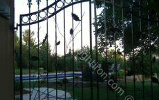 Wrought_Iron_Gate_101_jpg